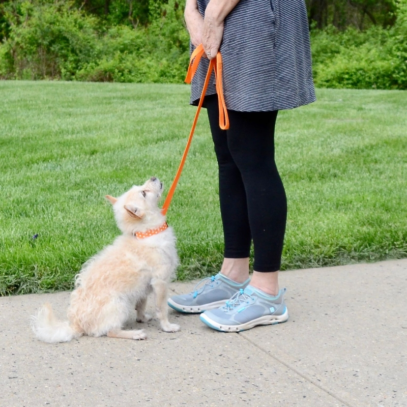 Personal In-Home Dog Training Lessons in Central NJ, Dog Behavior